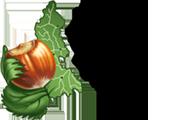 Consorzio Tutela Nocciola Piemonte I.G.P. Logo
